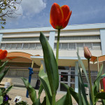 (5月11日)緊急事態宣言延長に伴う「ちゅうりっぷ組」、「園庭開放」日程変更のお知らせ